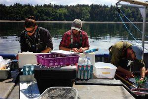 Salish Sea Marine Survival Project