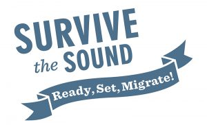 Ready, Set, Migrate!