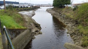 Partnering with Salish Sea Tribes to Restore Salmon Populations