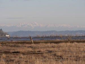 Nearshore and Estuary Habitat