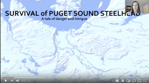 Survival of Puget Sound Steelhead – A Tale of Danger and Intrigue