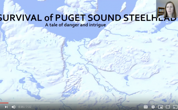 Puget Sound steelhead presentation