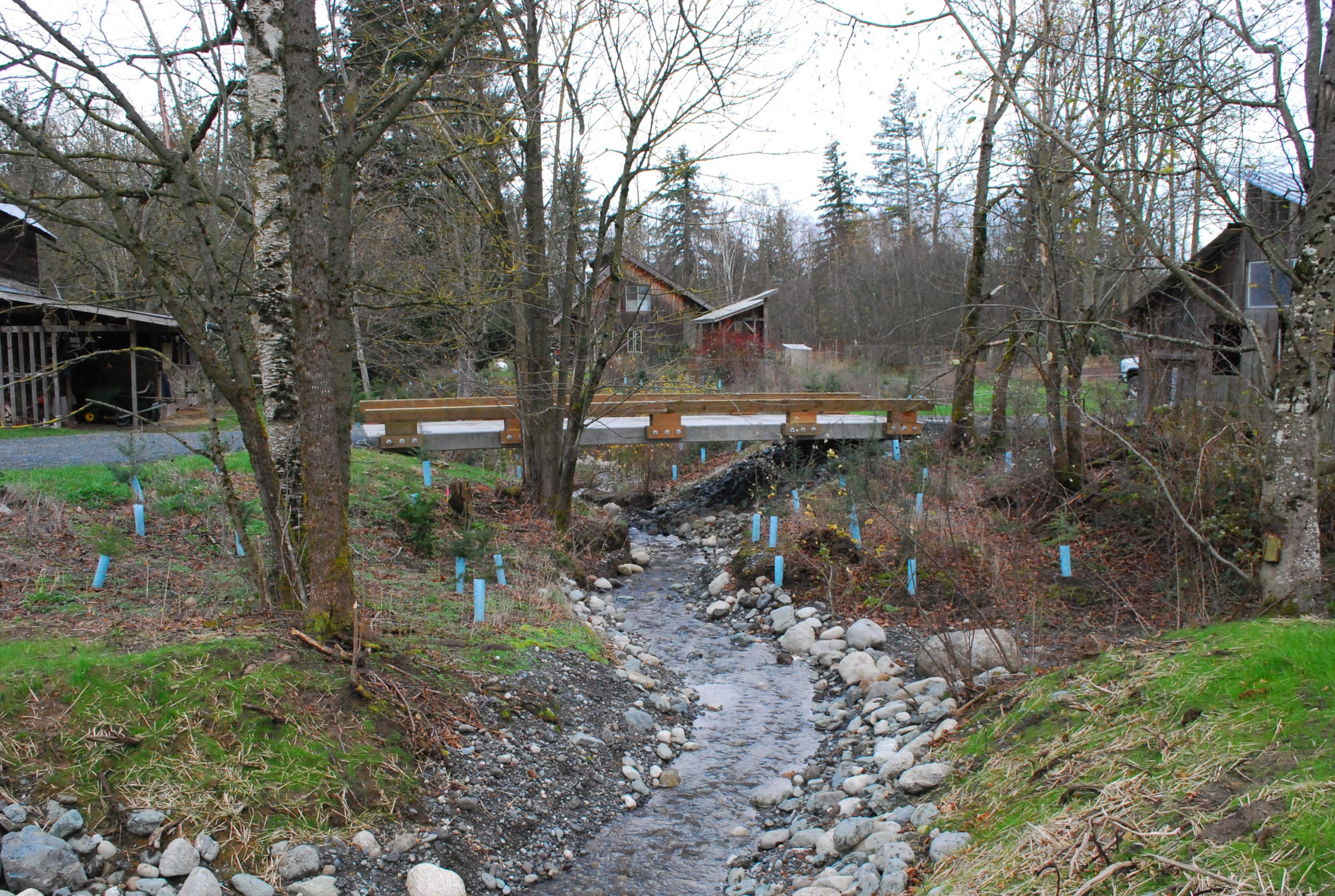 A rocky stream runs freely underneath a new bridge with a low guard rail. Tall trees on both banks are interspersed with blue plant guards marking new plants. Three buildings with peaked roofs are int he background among trees.