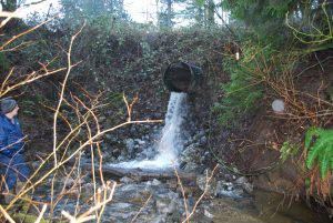Culvert before restoration: a wide pipe emerging from a steep hillside spilling water several feet into a stream below. A person in a blue jacket and grey hat stands to the side of the image behind branches of a tree.