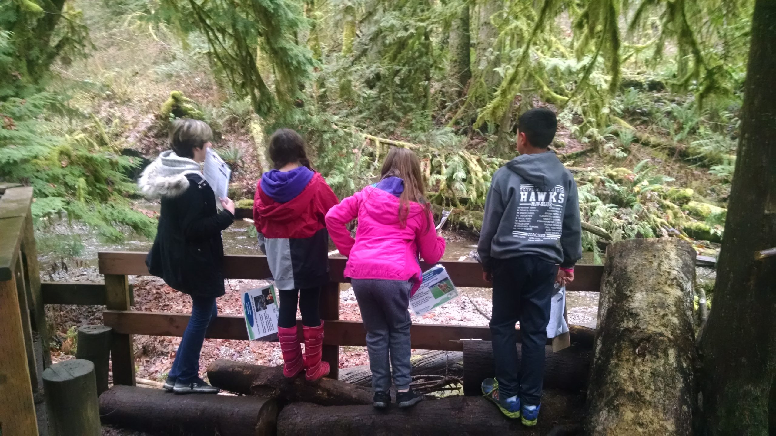Outdoor photo of four children in hooded raincoats facing away from the camera, standing on logs to look over a fence at a forest creek.