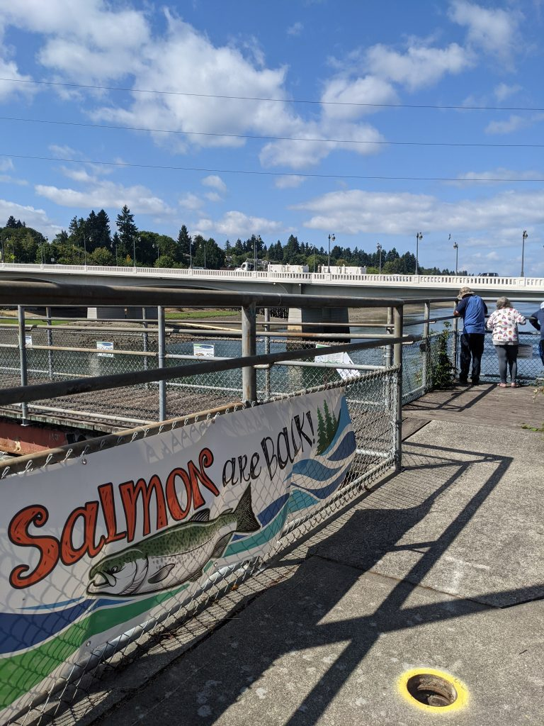 """Outdoor photo taken at a waterfront pier. A colorful banner reading """"Salmon are back!"""" hangs on a low fence in the foreground. Several people facing away from the camera are looking over a railing into the water in the background."""